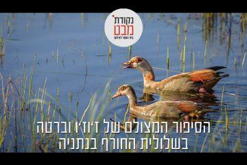 סיפור על אווזים, שלולית חורף וצילום מתמשך…